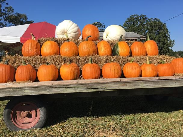 Raleigh is home to many fun fall traditions.