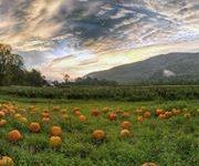 NC Features Fall Foliage