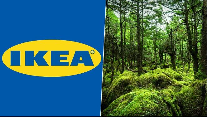 Swedish furniture company, IKEA, buys 10,840 acres of land in SE Georgia
