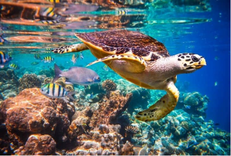 What are some of the biggest issues marine life face?